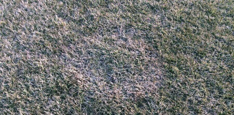 Macchia bruna invernale (Rhizoctonia cerealis)