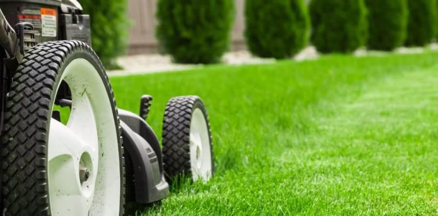 Quale altezza di taglio preferire per il tappeto erboso?