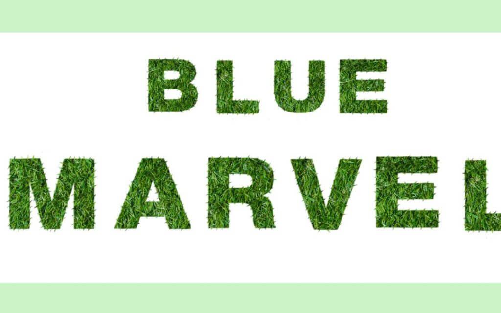 La gramigna – Blue Marvel