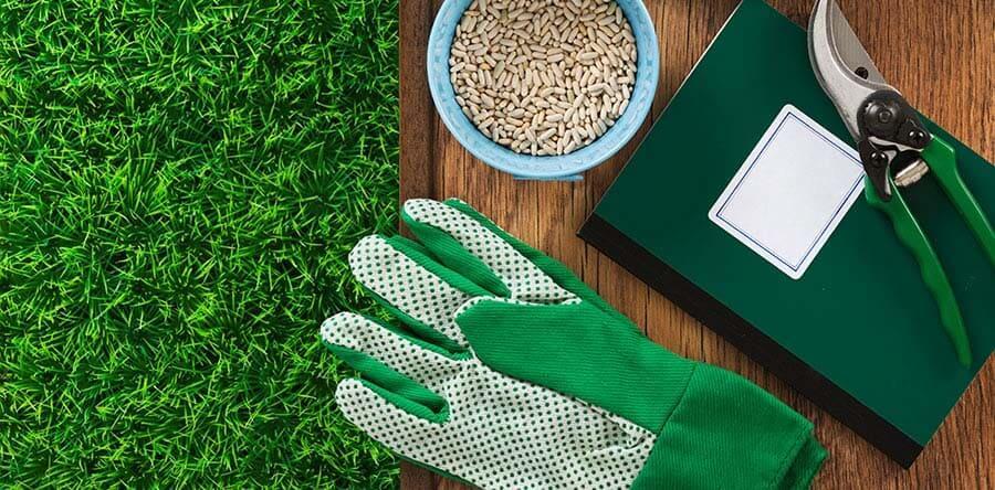 La semina del prato: come farla
