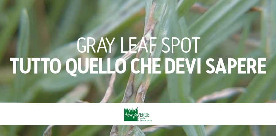 GRAY-LEAF_SPOT