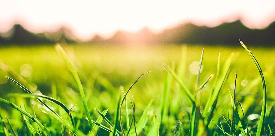 la nutrizione primaverile del tappeto erboso