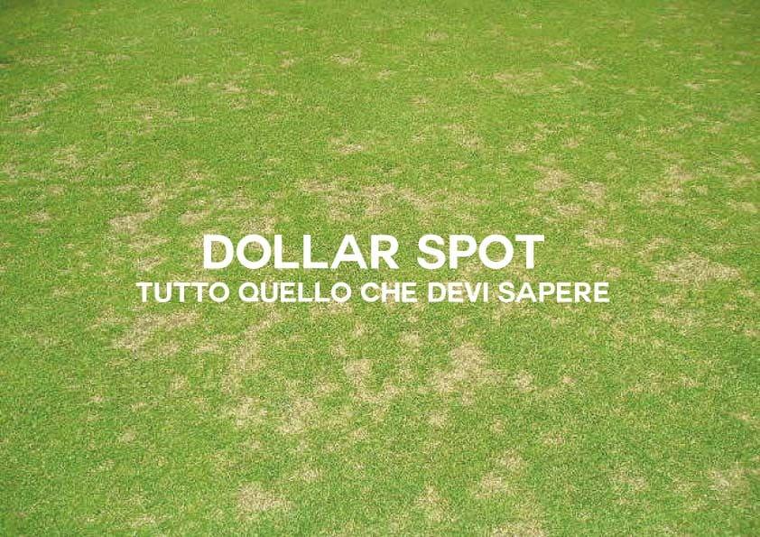 Dollar Spot: Tutto Quello Che Devi Sapere