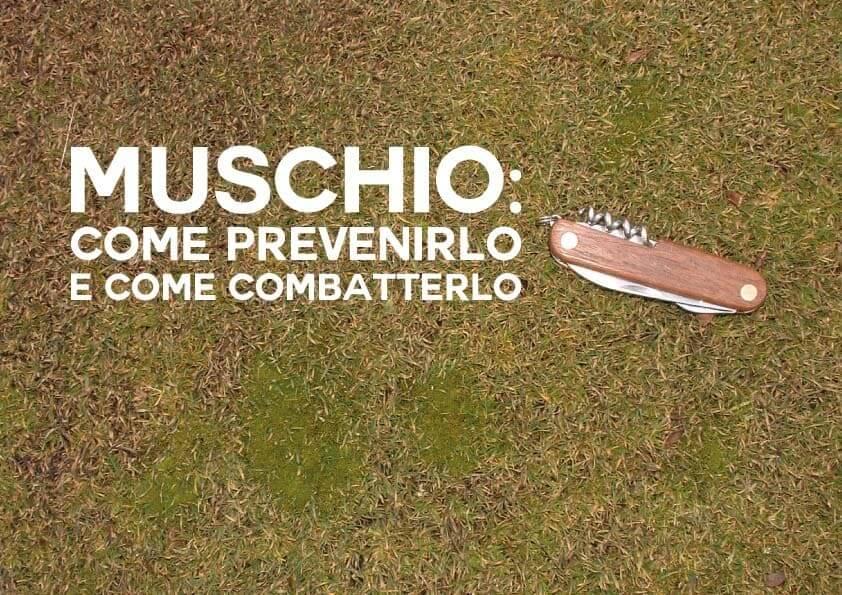 Muschio: Come Prevenirlo e Come Combatterlo