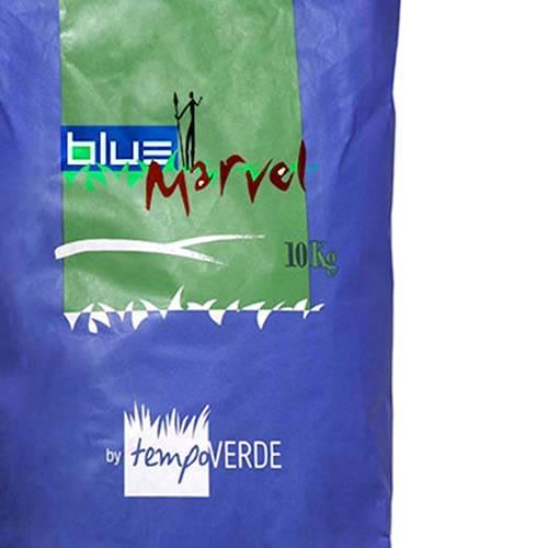 Blue Marvel: La gramigna migliorata si adatta ad aree mediterranee sottoposte a siccità e caldo prolungato