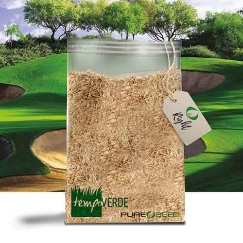 Rightè unaPoa Pratensisrilasciata daPure Seed Testing, Inc.e presenta un'ottima resistenza all'ombra e ai tagli bassi