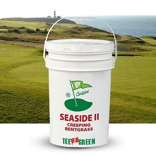 Seaside IIha confermatoeccezionale resistenza alla salinitàin Irlanda dove è stata l'unica sopravvissutafra tutte le agrostidialla prova di sea-spray