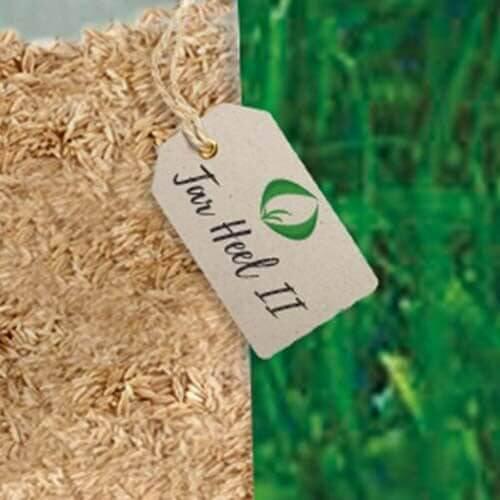 Tar Heel IIè una varietà diFestuca Arundinaceadi alta qualità sviluppata dalla ricercaPure-SeedTesting, Inc.