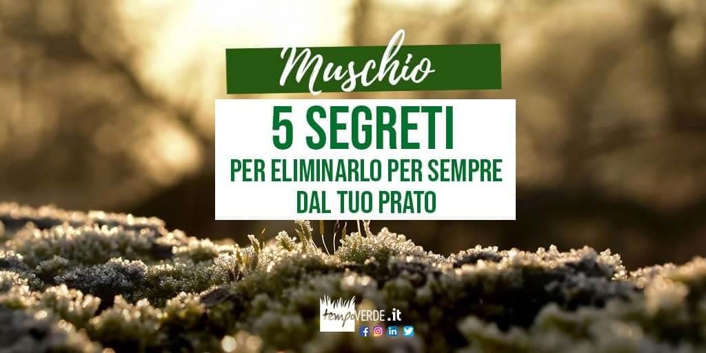 Muschio: 5 segreti per eliminarlo per sempre dal tuo prato
