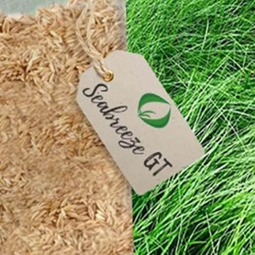 Seabreeze GT(PST-4SU), prodotto della ricerca Pure Seed Testing, Inc., è unafestuca rubra tricophylla