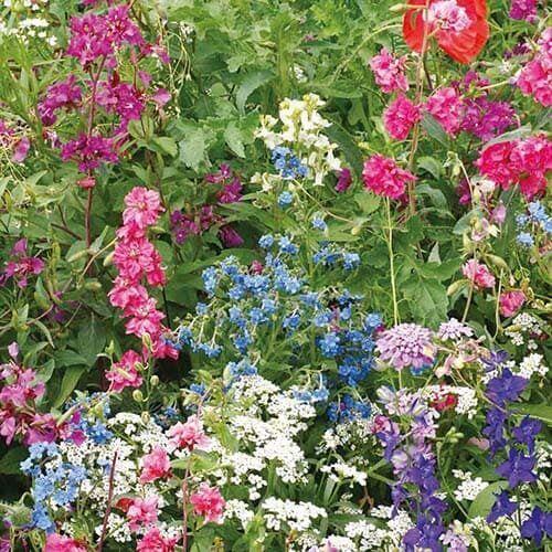 Ombrages: miscela fiorita costituita da specie perenni e annuali